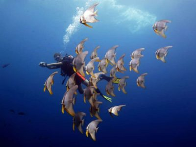 diving in koh mak and koh chang thailand